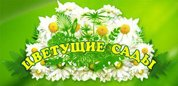 Гипермаркет цветов и растений 'Цветущие Сады'